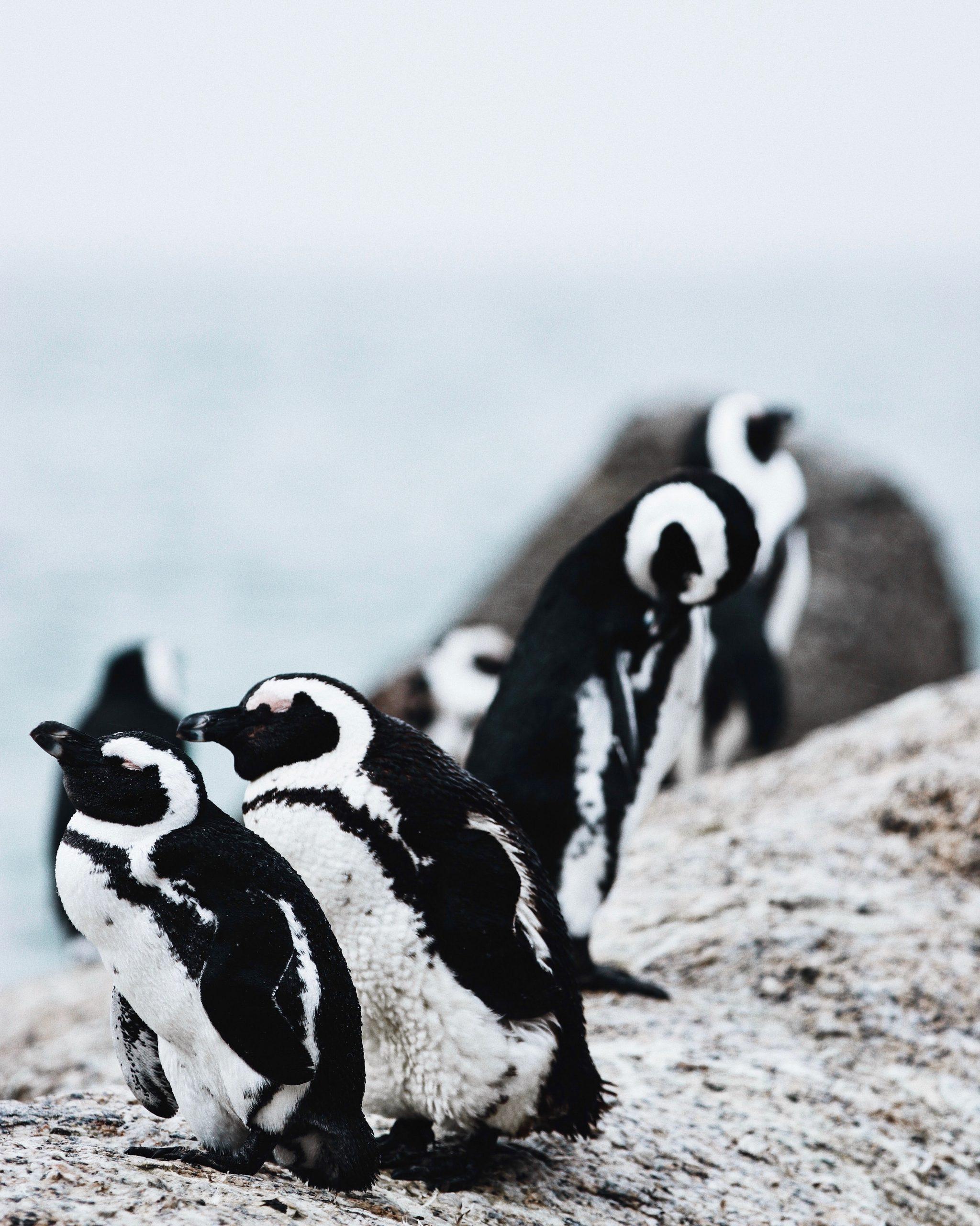 penguin symbol